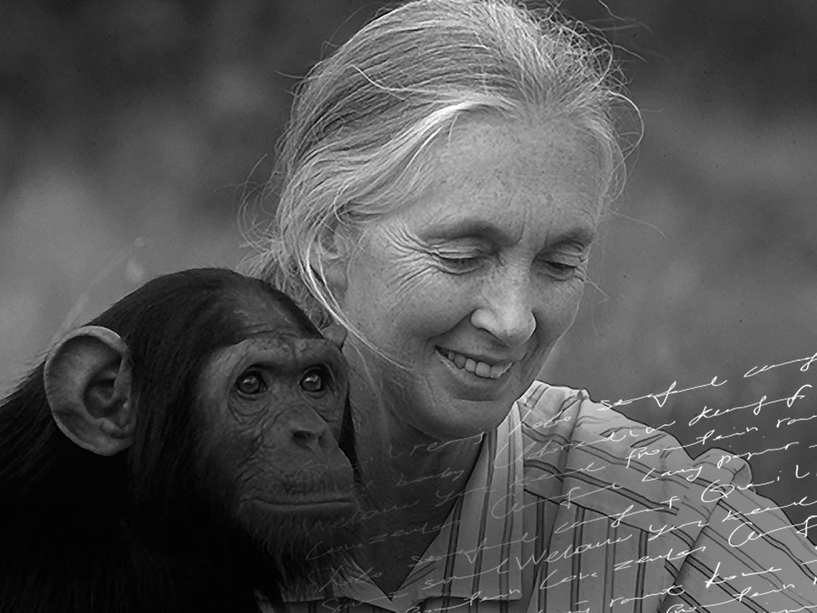 Movieletters - Cortometraggi ispirati alla lettera della Dr. Jane Goodall